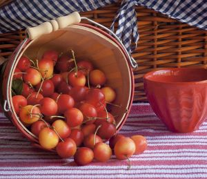 Fruit Basket Cherries Stems 2.jpg